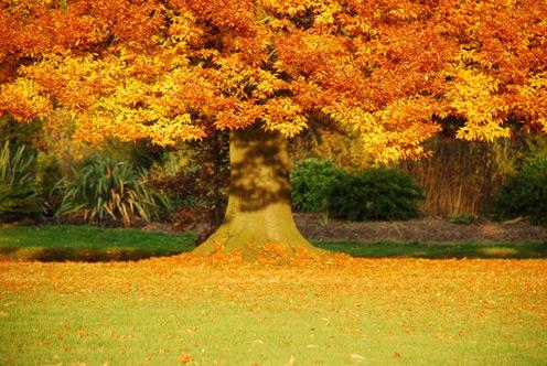 autumn_15.jpg